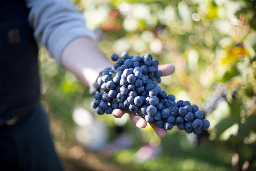 Farm – Iron Heart Winery